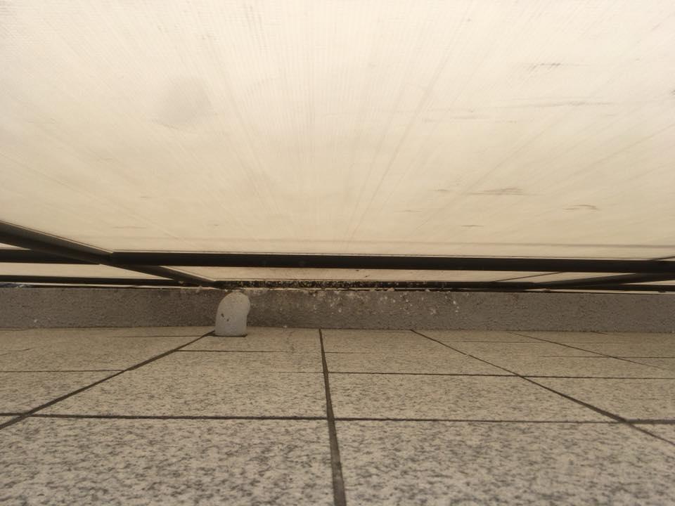 鳩の糞害対策